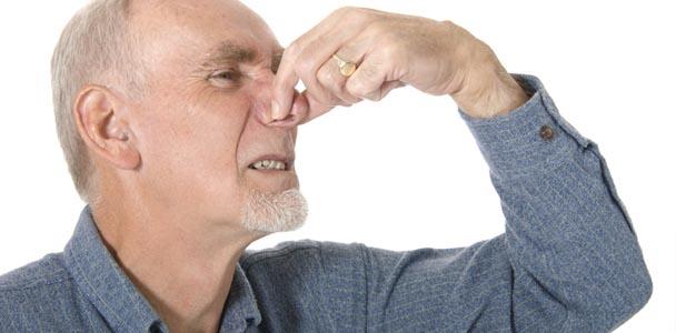 Mauvaise odeur causée par les animaux